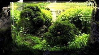 The Art of the Planted Aquarium 2017 - Nano tanks 4-6