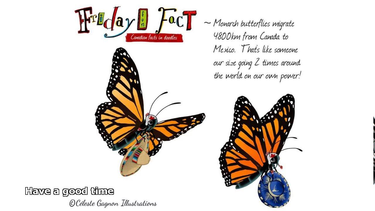 butterflies facts - YouTube