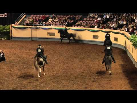 Morgan Grand National Open Park Saddle Championship Class
