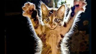 Смешные кошки и коты Ноябрь 2019  Новые приколы с котами смешные коты 2019 Funny Cats Animals 105
