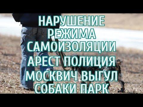 🔴 Полиция намерена арестовать москвича, гулявшего с собакой в парке