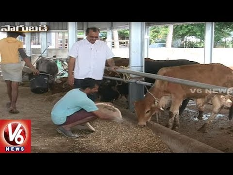 Success Story Of Organic Farmer Murali Krishna | Shamshabad | Sagubadi | V6 News