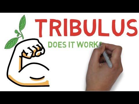 Tribulus Terrestris Supplements
