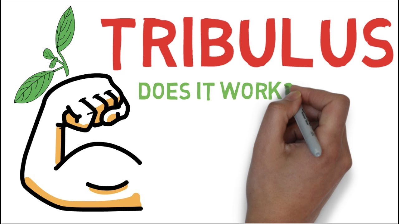 TRIBULUS EXPLAINED: DOES TRIBULUS TERRESTRIS WORK ? - YouTube