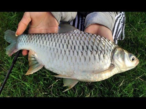 Carp fishing ตกปลาเกล็ด แบบสปิ๋ว by เมย์มี่