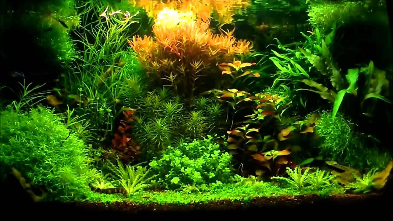 Aquarium plant style hollandais youtube for Plante pour aquarium