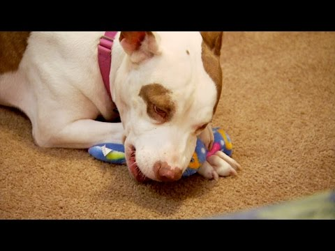 Smack's Second Chance at a Forever Home