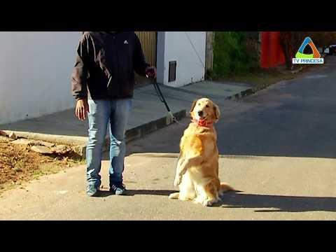 (JC 06/07/2017) Mercado dos Pets: Adestramento de cães