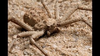 10 Most Dangerous Spiders On Earth…
