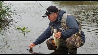 Ловля голавля в начале сентября - рыбалка с друзьями