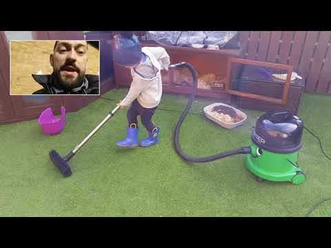 #USINGTHEVACUUM CLEANING Artificial Grass Lawn with NUMATIC GEORGE Vacuum - Henry Hoovers Best Mate!