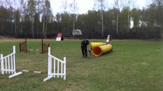 Gena - Border Terrier - First Agility Lane For Her