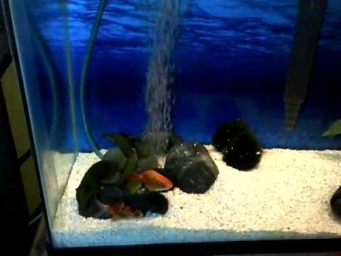 Air stones and aeration in aquariums youtube for Air stone fish