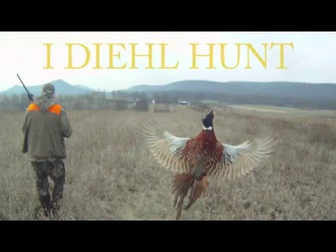 Paid Pheasant Hunt In PA