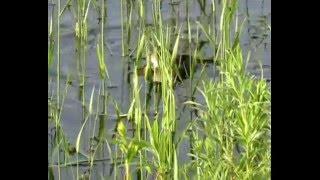 Хвост, чешуя: 34 выпуск - рыбалка в Астрахани, Половодье и нерест рыбы