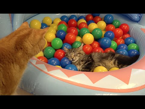 Thumbnail: 10 Cats playing in a pool of colorful balls ボールプールで遊ぶ10匹の猫