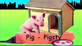 learn animals and their houses train learning animal homes for kids