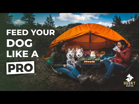 What My Dog Eats In A Day RAW - Camping with My Dog Tips | HUSKY SQUAD