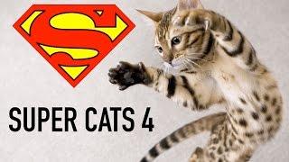 Super Cats 4