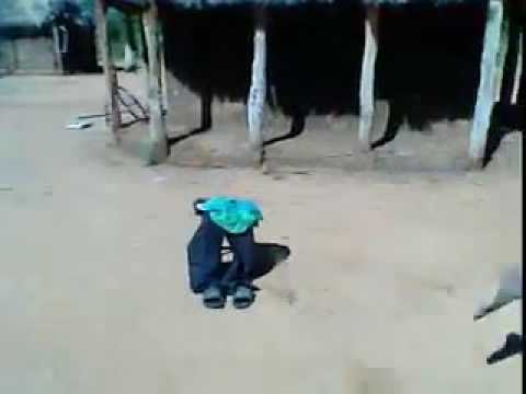 Limpopo witch