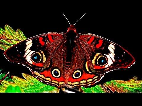 Красивые бабочки ютуб видео с картинок под музыку