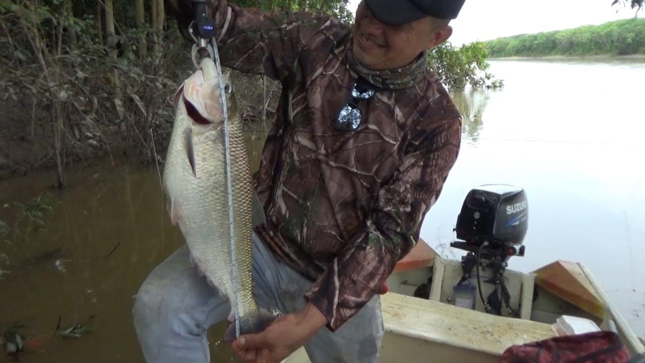 Muchos peces diferentes en un solo lugar , Pesca con anzuelo y caña.