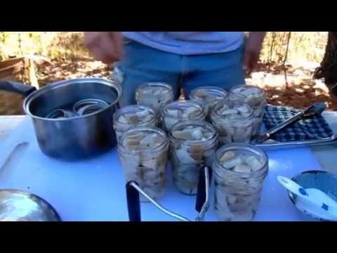 Canning Wild Oyster Mushrooms