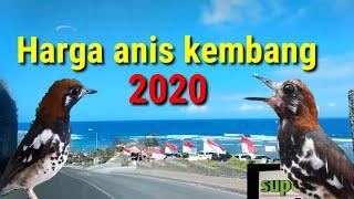 Harga Anis kembang 2020 #update #harga #aniskembang