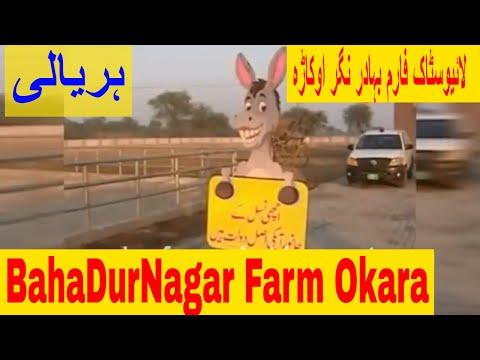 LIVE STOCK FARM BAHADURNAGER OKARA | HARYALI (Agricultural Punjabi Program) | ہریالی ۔ بہادرنگر فارم