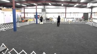 Dickson's Akc Obedience Novice A & Rally Excellent B