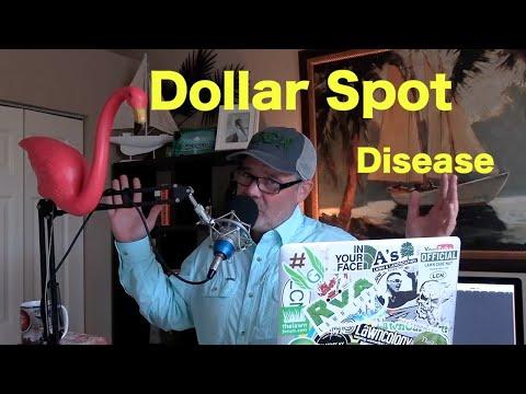 Dollar Spot Lawn Disease | Lawn Fungus Treatment Strategy