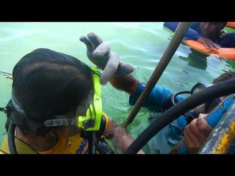 Scuba Diving Training Session