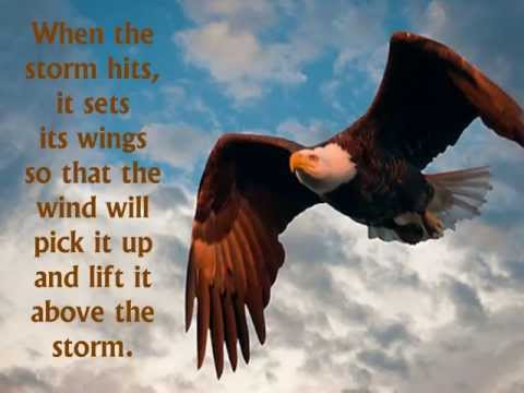 EAGLES IN A STORM   www wayofliving org
