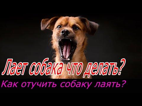 Вопрос: Как угомонить лающую собаку под окном многоэтажки?