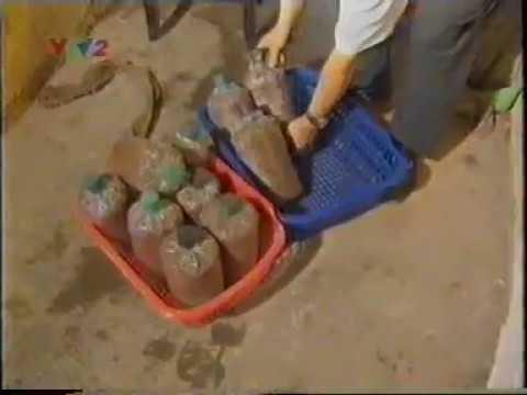 kỹ thuật trồng nấm mộc nhĩ