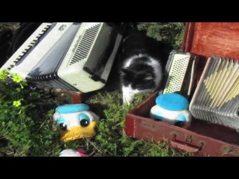 duckmandu:-smells-like-a-big-fluffy-kitty-(nirvana-accordion-parody)