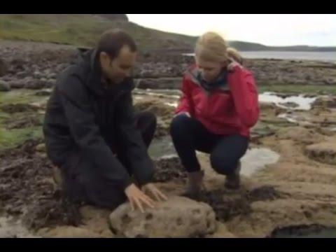 Следы динозавров найдены в Шотландии