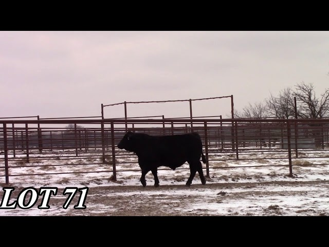 Mead Angus Farms Lot 71