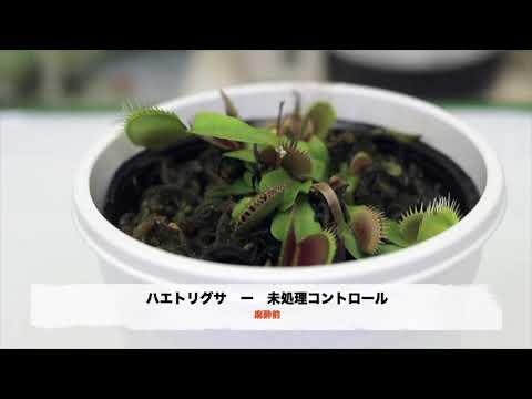 麻酔にかかる植物