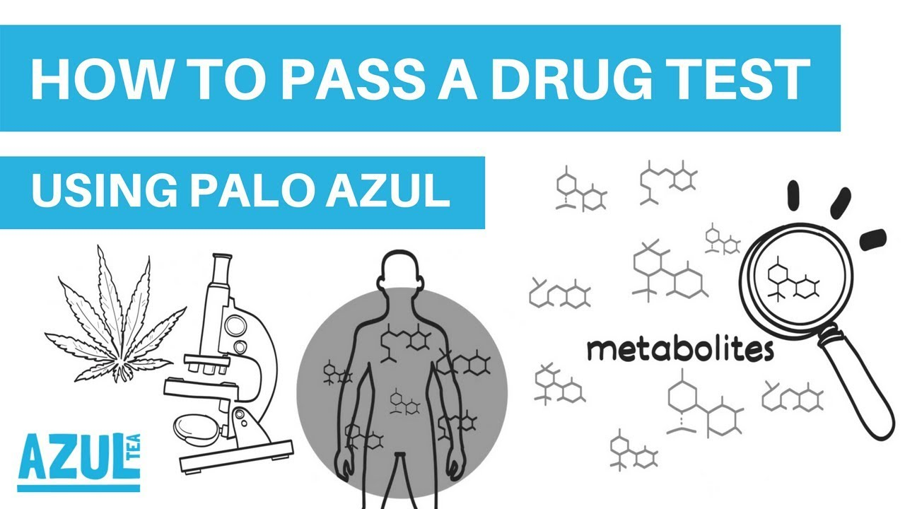 Palo Azul for Passing a Drug Test [Updated Guide 2019] +