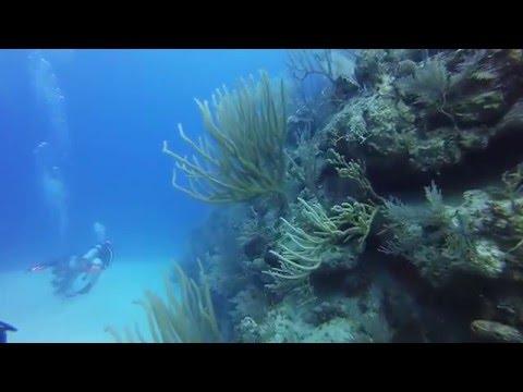 Grand Turk diving compilation 2