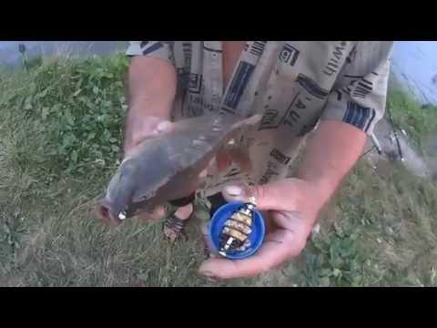 И такие рыбалки бывают (Дневник рыболова)
