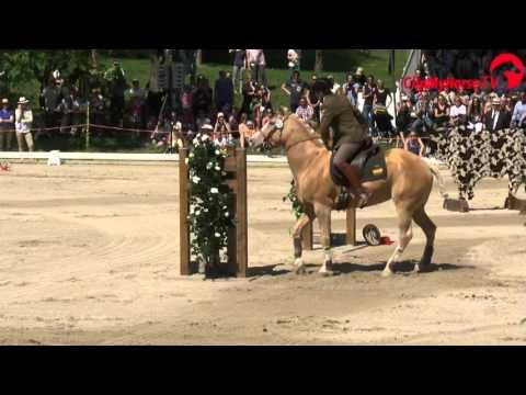 Mihai Malta | Candy | Speed Trail | Europameisterschaften Working Equitation | 2016