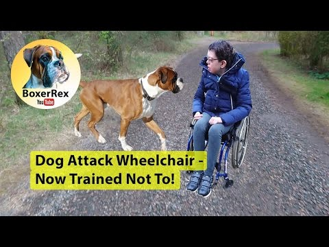 Dog Attack Wheelchair - Now Trained Not To!