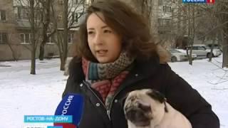 """""""Аэрофлот"""" запретил перевозку пород собак, которые плохо переносят полеты"""