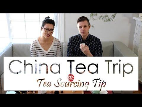 China Tea Trip 2018 and Sourcing Tip | Tasting Bai Hao Yin Zhen Top Grade 2016