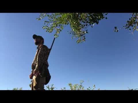 2020 Dove Hunting In Nebraska