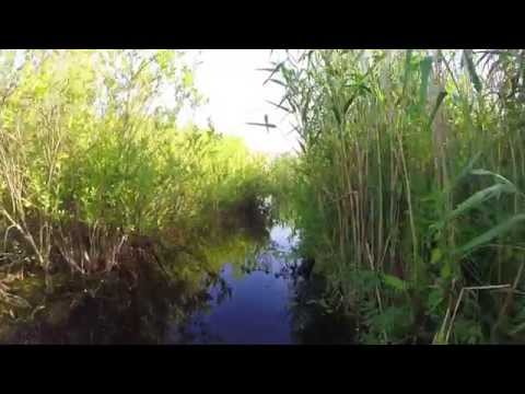 Delta Dunarii -
