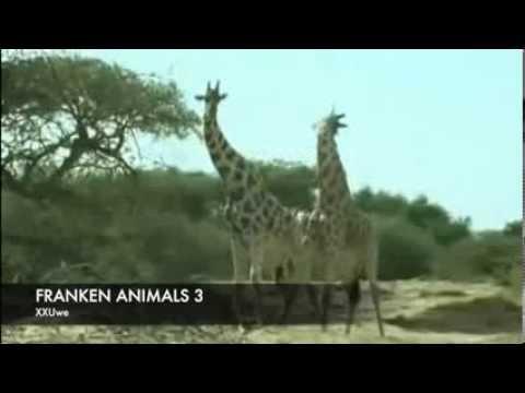 XXUwe - FRANKEN ANIMALS 3