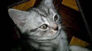 Коты будят своих хозяев утром (месть)! Котенок говорит ОТСТАНЬ. Самое милое видео!